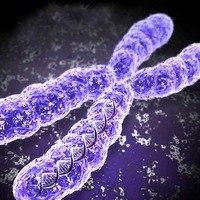 Аватар пользователя Xromosoma