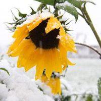 Аватар пользователя sunflower8